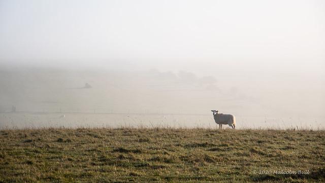 Lone Sheep - Mill Hill (22)