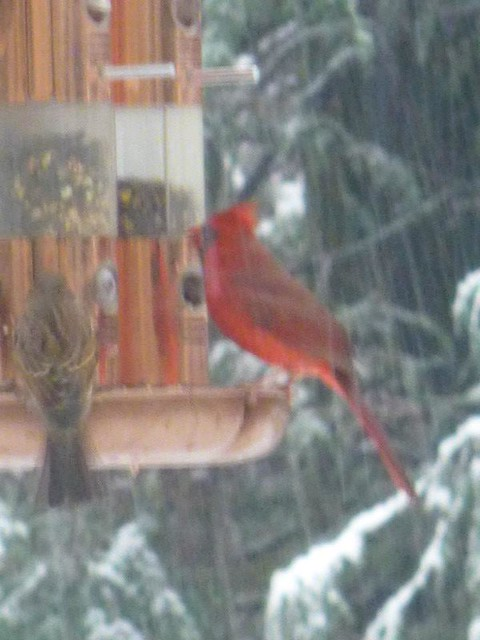 BirdsFeedingNovemberSnowstorm2014