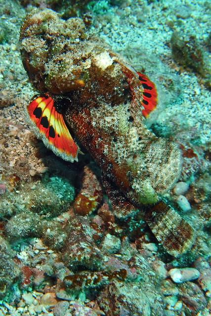 scorpion colors