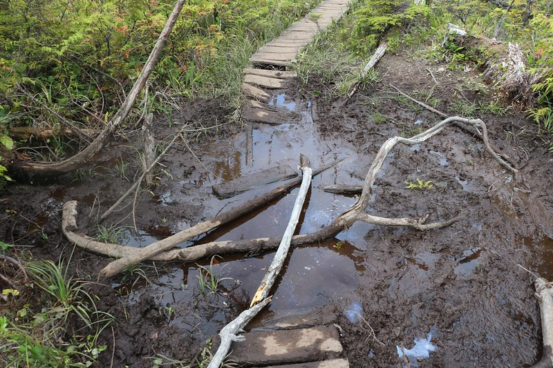 Yet another section of wooden walkway that disappeared into a bog in this section of trail