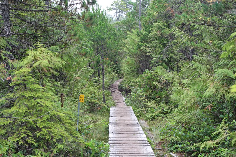 Here at km 54 the wooden walkway goes from newer to decrepit, which is not unusual on the West Coast Trail