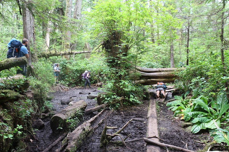 We met some other hikers at a muddy zone - some went around, and some crawled under an uprooted tree
