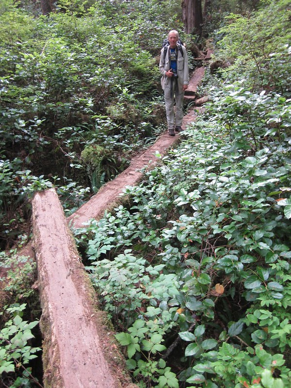 Fallen Logs become the trail with their upper surfaces flattened via chainsaw
