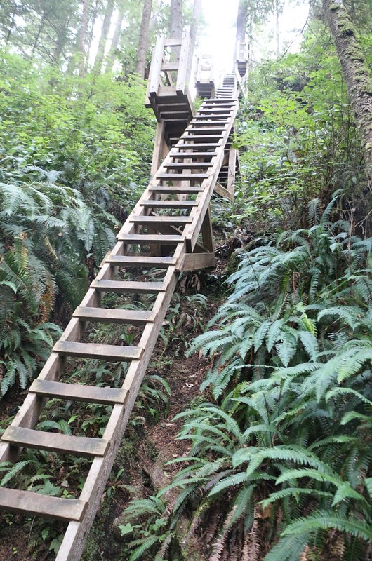 The hike from Walbran Creek south begins with a LONG set of ladders - what a way to start your day!