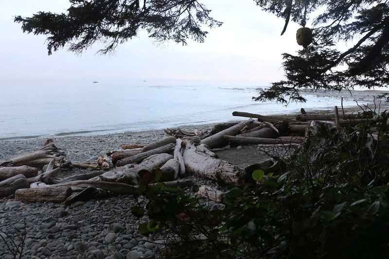 Looking back at our tiny camping spot at Walbran Creek in the morning as we head south on the West Coast Trail