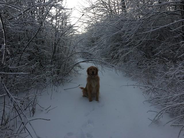 Mt Ephraim, Springfield, Vermont.     Winter