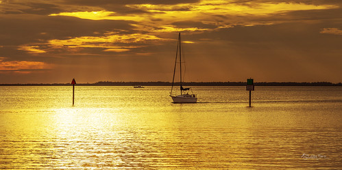 sail sailing boat yacht horizon sunset dusk clouds channelmarkers waves reflections beautiful serene scene waterscape peaceful lights navigation motors signs gold golden yellow blue orange charlotteharbor charlottecounty puntagorda florida fl photographer stevefrazierphotography furled sails sailor wake flock birds fowl water