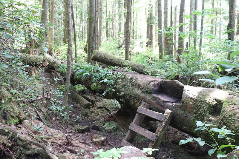 Yet another unique style of trail building - ladders and logs