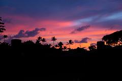 Sunset at Honolulu Zoo