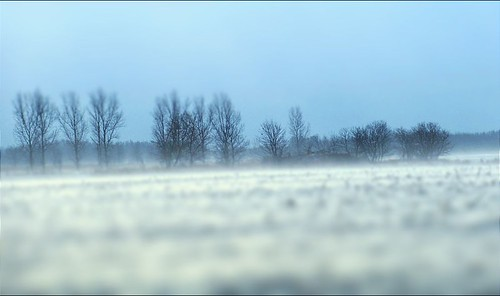"Photo Series: Landscape: ""A family of trees stands against a winter day with ground drifting snow"""