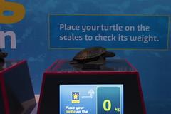 Turtles!