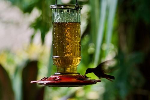Lamanai Nectar