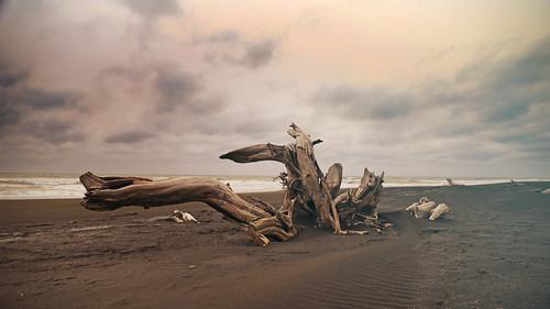 landscape coastal sunset dusk taranaki patea pateabeach beach tasmansea sea driftwood