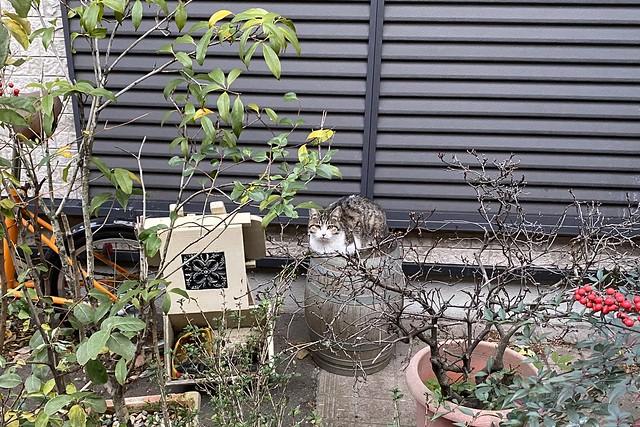 Today's Cat@2020-01-02