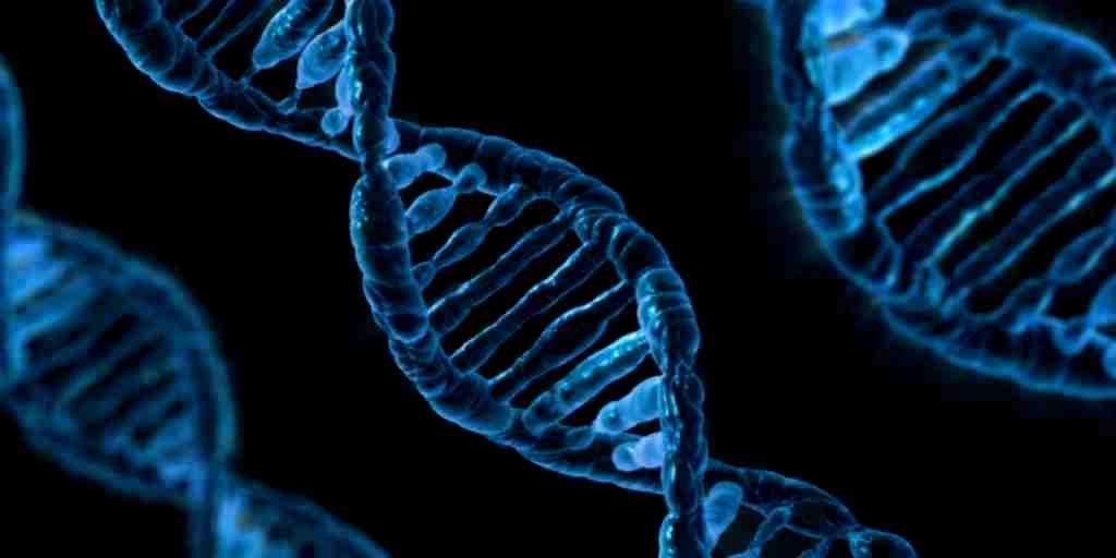 Un ordinateur fait à partir de l'ADN