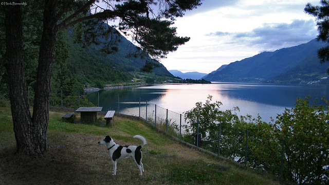 Norway: Odda, Sørfjorden evening view