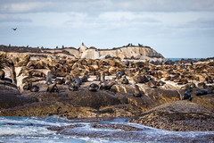 Seal Island (4)