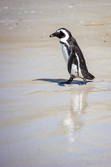 Penguin Reflections