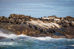Seal Island (1)