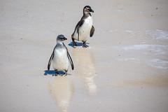 Penguin Beach Stroll