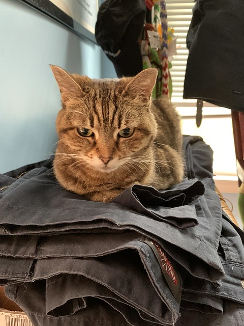 2020 2/366 1/2/2020 THURSDAY - Puss is making sure all my pants are coated in cat fur