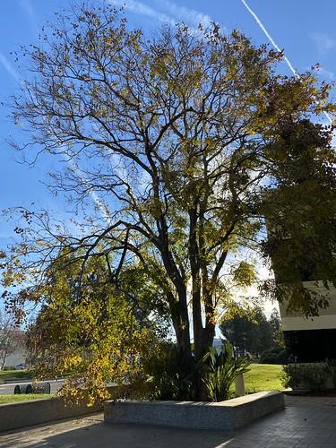 tree broken valencia work january 100views