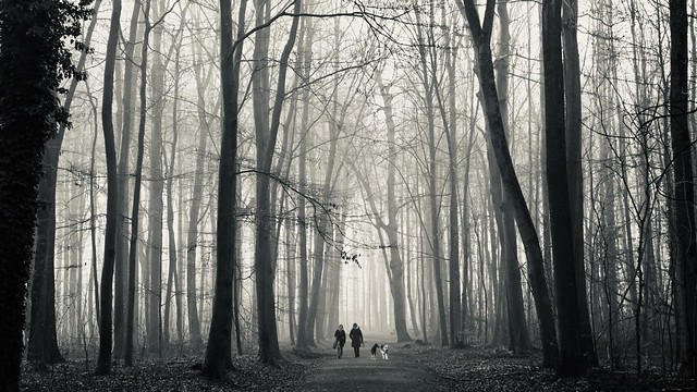 Early walk in the forest of Dortmund - monochrome