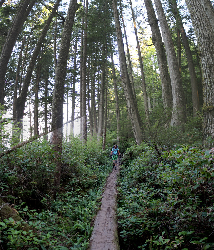 Tall trees and a long log doing trail duty on the West Coast Trail