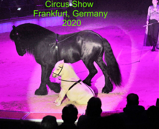 Friesian Horse and Mini Pony during the Great Christmas Circus Carl Busch Shows in Frankfurt am Main, Germany - January 2, 2020