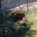 """<p><a href=""""https://www.flickr.com/people/tomoneill/"""">Tom O'Neill</a> posted a photo:</p>  <p><a href=""""https://www.flickr.com/photos/tomoneill/49319917342/"""" title=""""IMG_8657.jpg""""><img src=""""https://live.staticflickr.com/65535/49319917342_e21d415b4c_m.jpg"""" width=""""240"""" height=""""200"""" alt=""""IMG_8657.jpg"""" /></a></p>"""