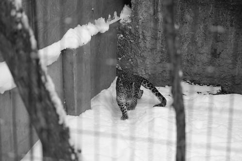 03-01-2020 at Asahiyama Zoo, Asahikawa (106)