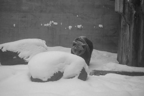 03-01-2020 at Asahiyama Zoo, Asahikawa (100)