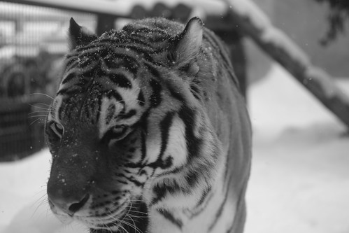 03-01-2020 at Asahiyama Zoo, Asahikawa (87)