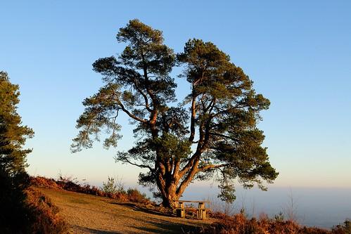 scoutsdamageskin leithhill surrey surreyhills anob picnictable tree overlook nationaltrust walksurreyhills