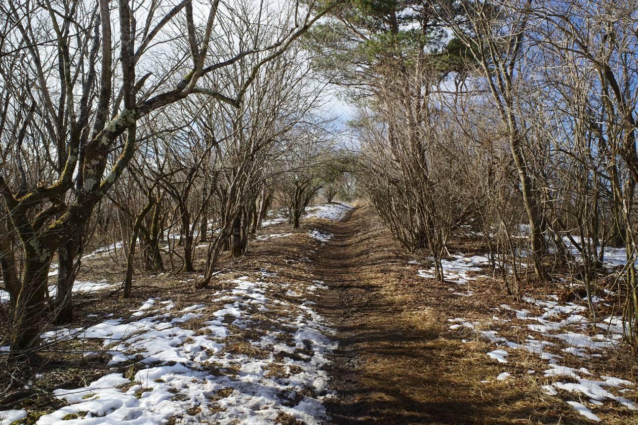 石割山~平尾山の稜線登山道