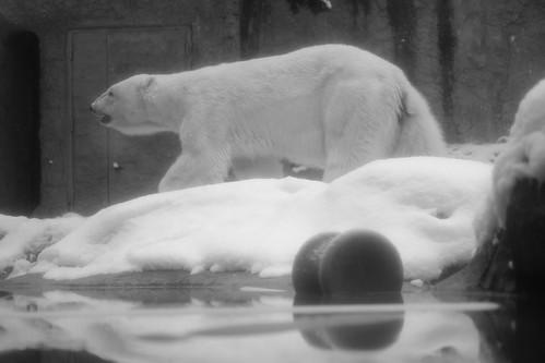 03-01-2020 at Asahiyama Zoo, Asahikawa (7)