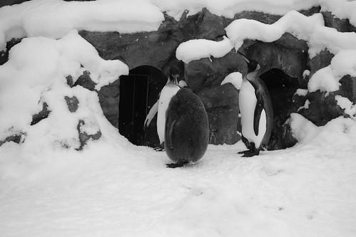 03-01-2020 at Asahiyama Zoo, Asahikawa (115)