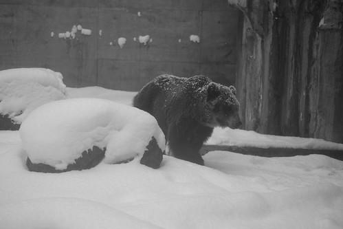 03-01-2020 at Asahiyama Zoo, Asahikawa (101)