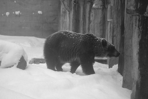 03-01-2020 at Asahiyama Zoo, Asahikawa (98)