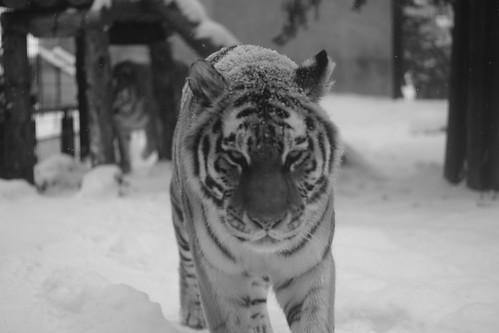 03-01-2020 at Asahiyama Zoo, Asahikawa (95)
