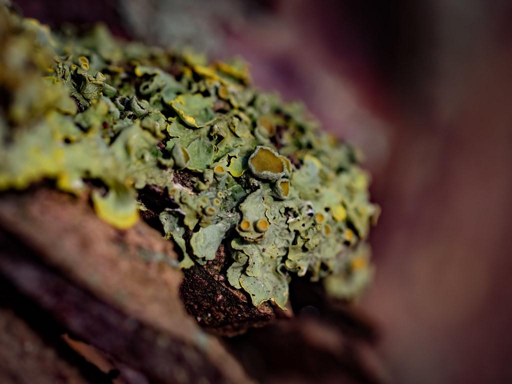 Lichens... 49320757337_6ac05efe97_b