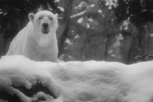 03-01-2020 at Asahiyama Zoo, Asahikawa (6)