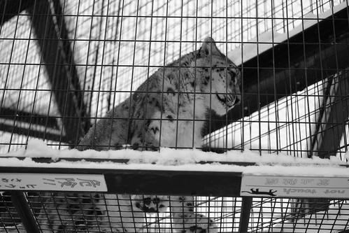 03-01-2020 at Asahiyama Zoo, Asahikawa (114)