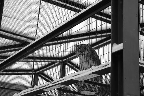 03-01-2020 at Asahiyama Zoo, Asahikawa (107)