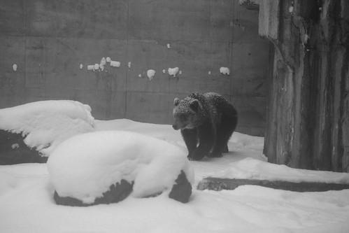 03-01-2020 at Asahiyama Zoo, Asahikawa (99)