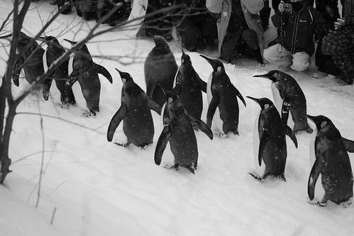 03-01-2020 at Asahiyama Zoo, Asahikawa (83)