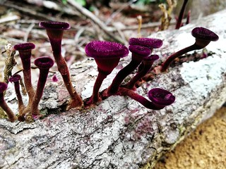 colorful fungi