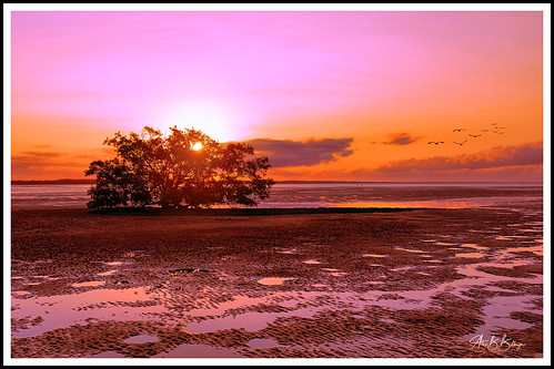 sunset australia queensland color nature ocea beach mangrove sun evening