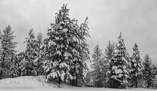 January 2020 in Siberia