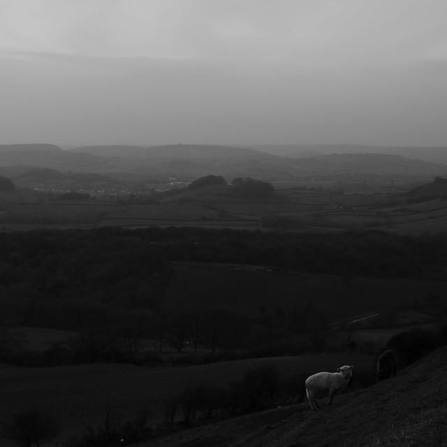 West Dorset View